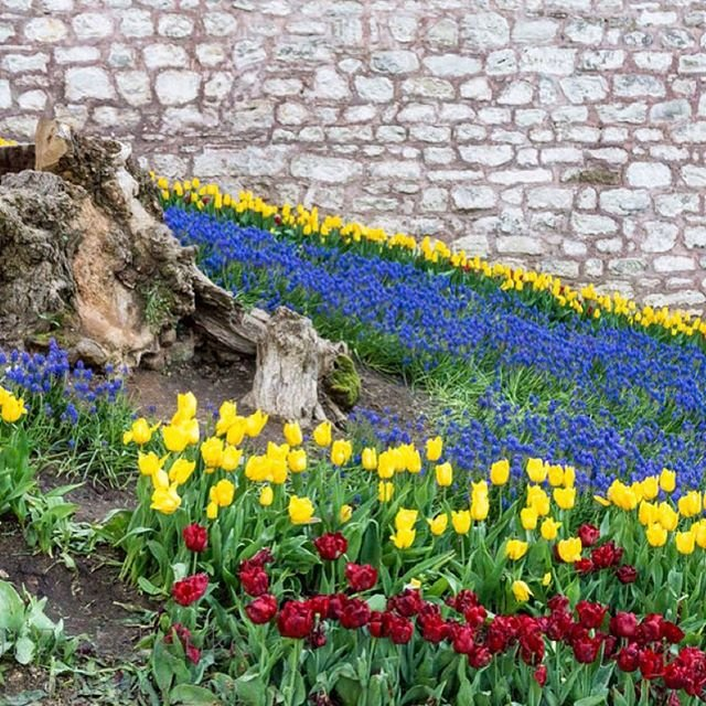 #colorful #flower #Istanbul #Turkey #park #Gülhane_parki #Gülhane #парк #Стамбул #турция #Гюльхане #tulip #тюльпаны