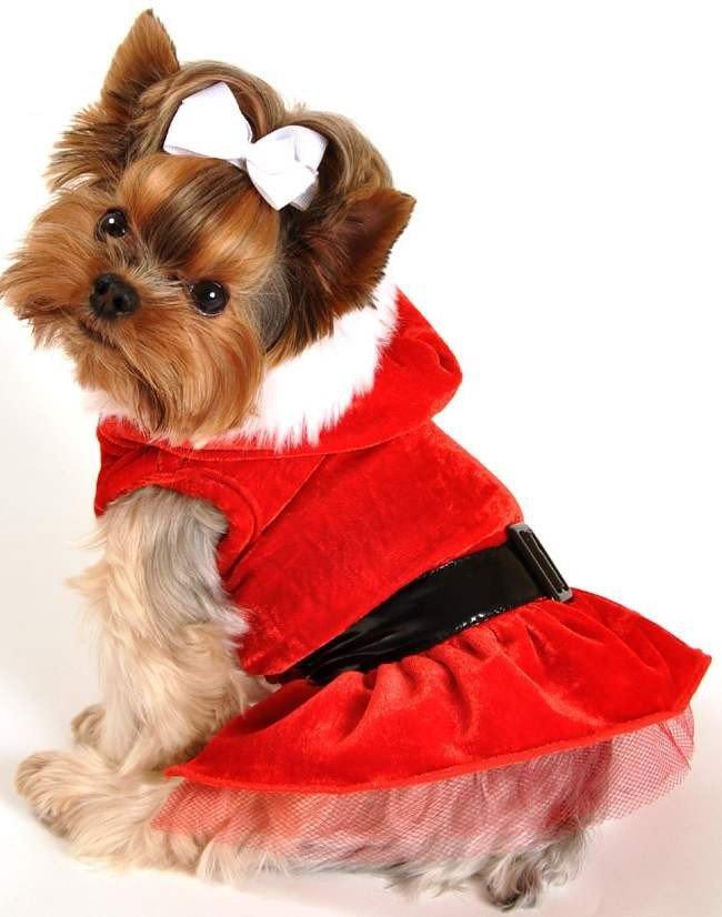 одним картинки собаки в одежде том, что