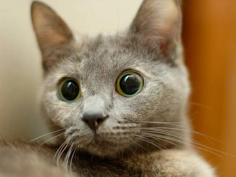 Что? Кто? Почем? — глядя на выпученные глазки животных, начинаешь думать, что они тоже интересуются самыми злободневными вопросами.…