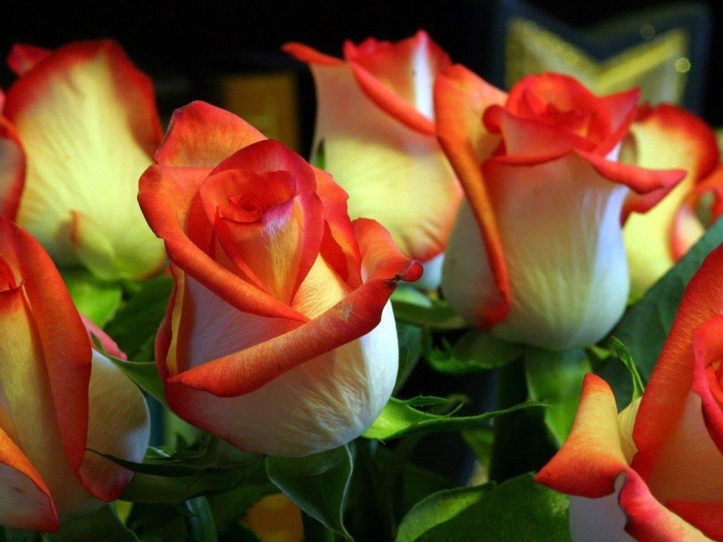 картинки с розами красивые живыми старинные