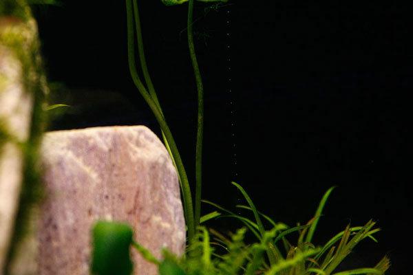 Растения выделяют пузырьки кислорода