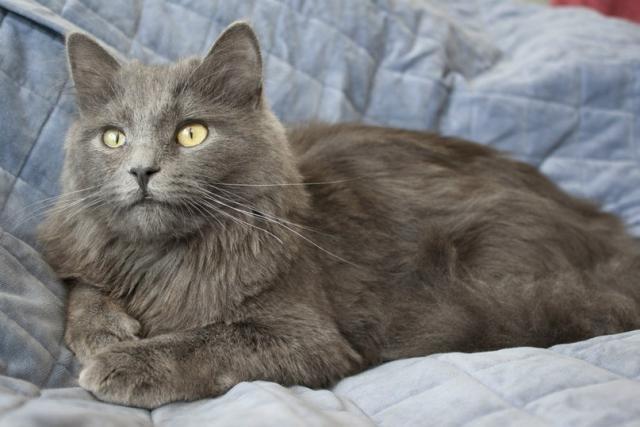 Почему у кота шерсть скатывается