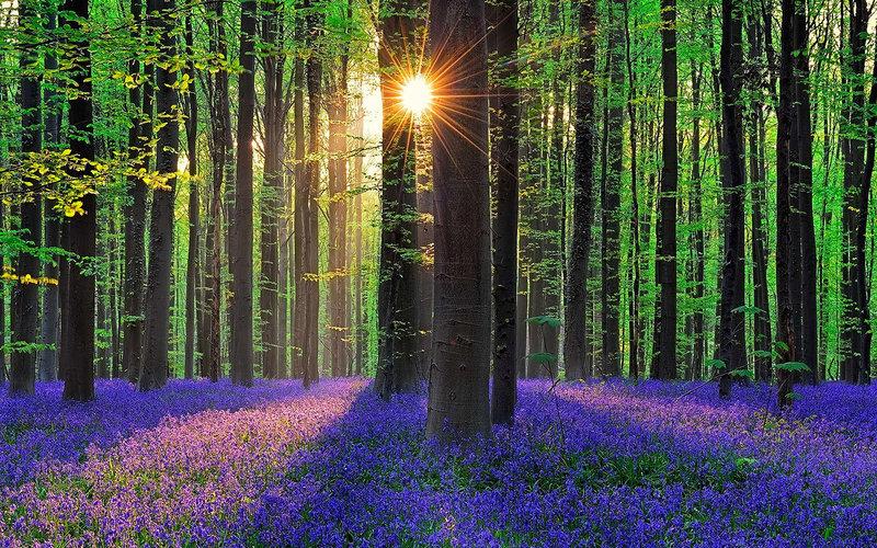 Халлербос - сказочный лес в Бельгии