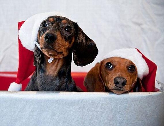 Симпатичные животные в Новогодних костюмах