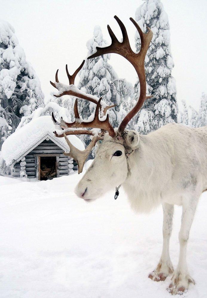 Есть ли на свете другое место, больше похожее на новогоднюю сказку?, Есть ли на свете другое место, больше похожее на новогоднюю сказку?                                           -----------