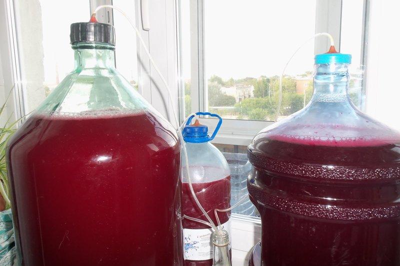 Рецепт домашнего вина из винограда изабелла в домашних условиях 401