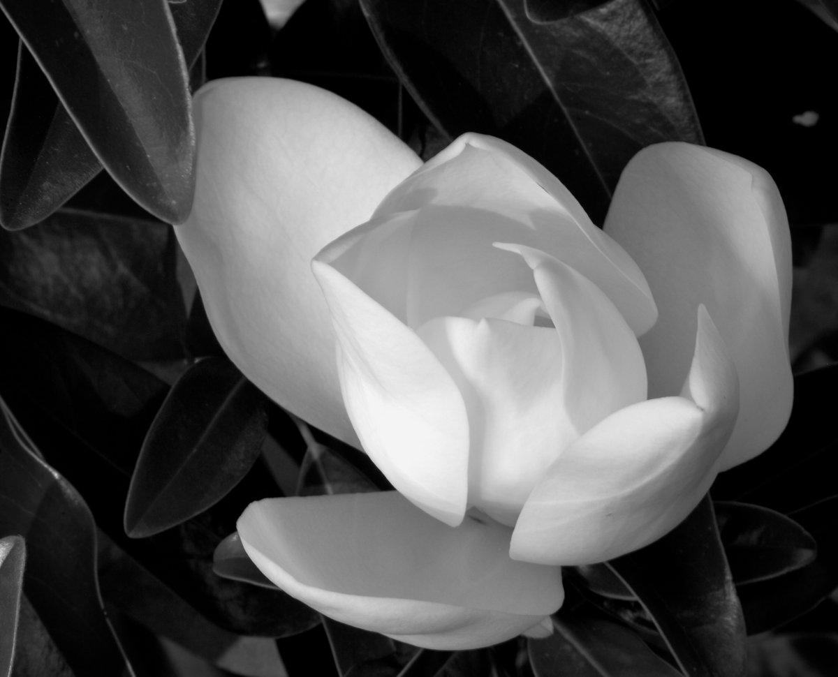 Красивые фото в черно белом цвете