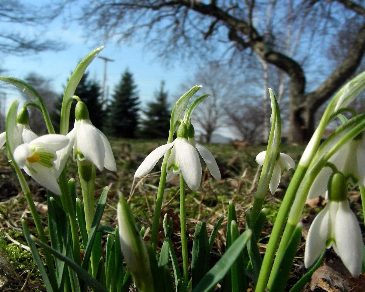 жалоба фотографии весна в лесу подснежники которая определению