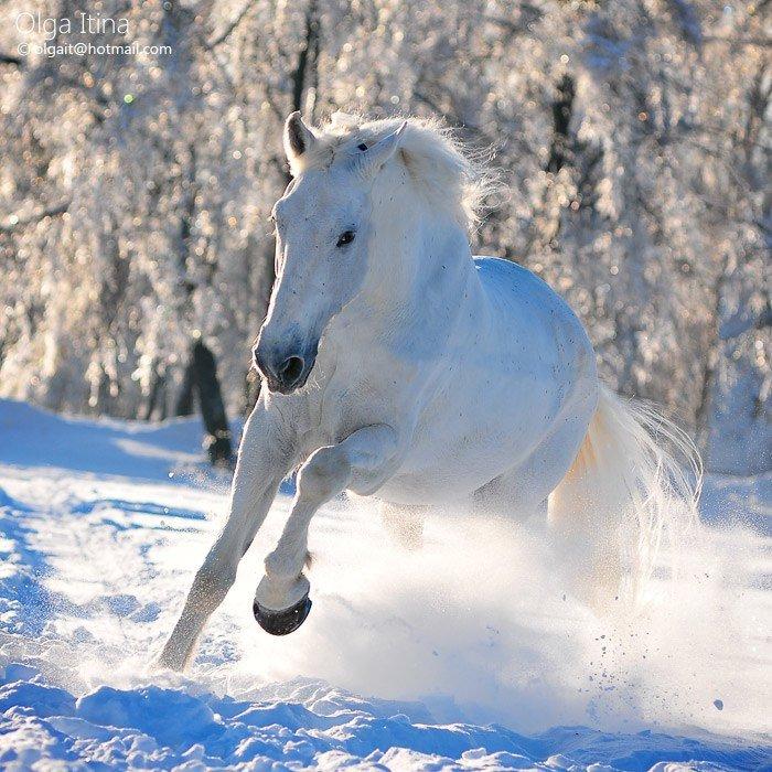 Открытка лошади зимой, жизнь веселей