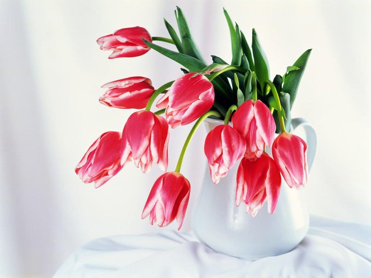 Открытки с красными тюльпанами