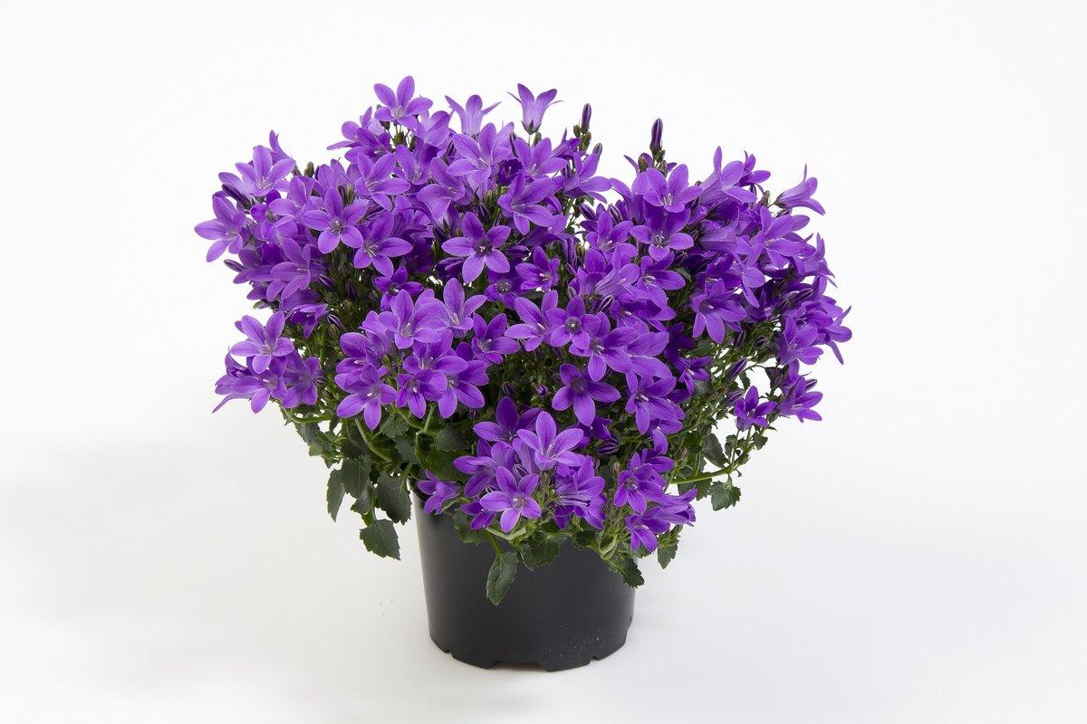 Цветы жених купить, цветов