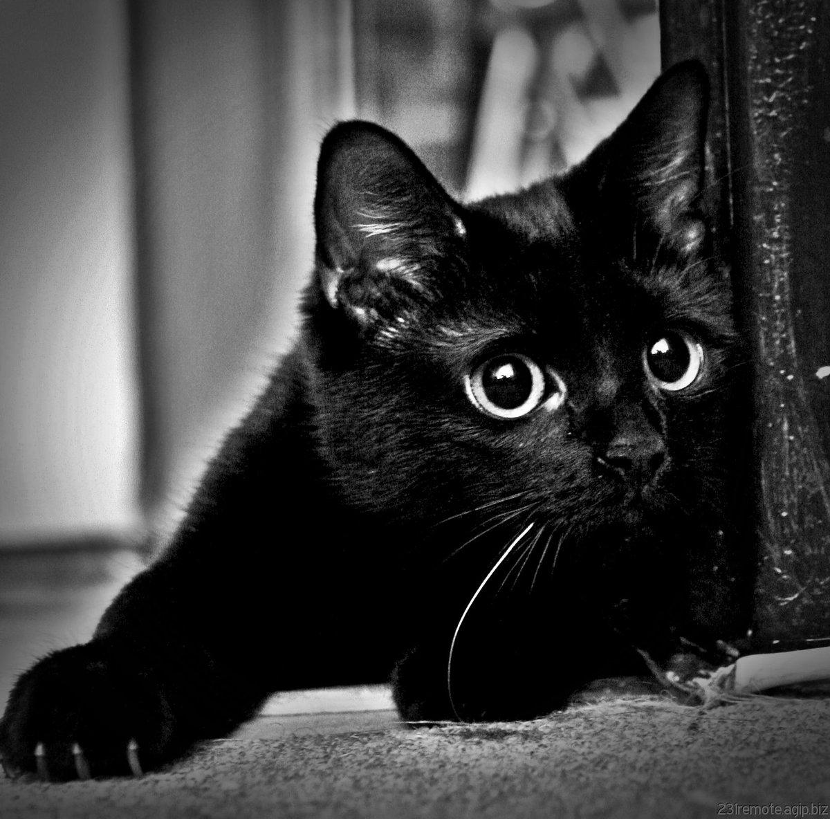 Картинка черный кот с надписью, перевести английский