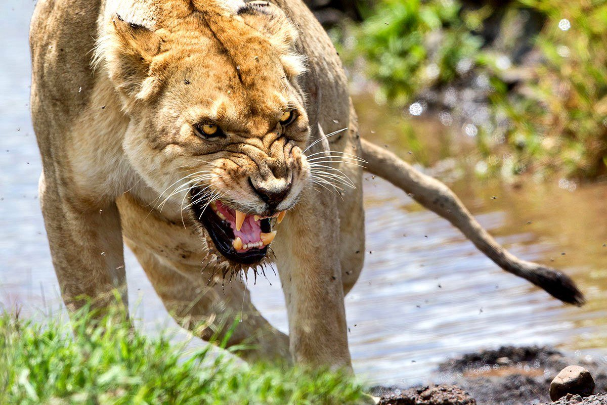 Картинки диких животных злых