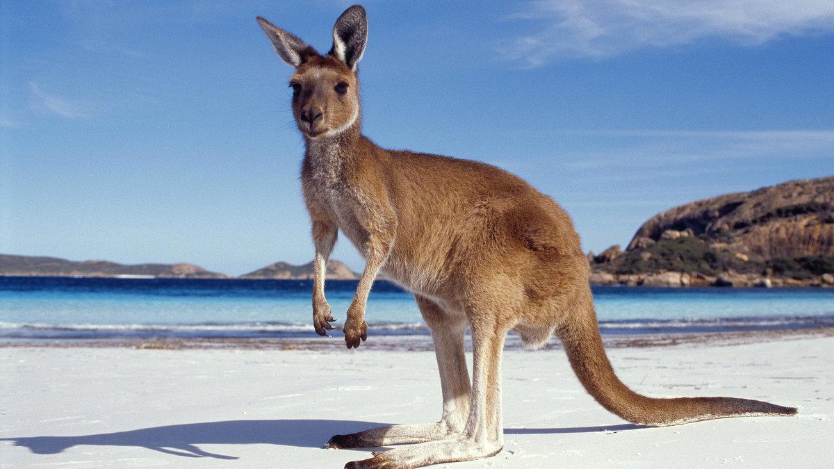 Марту анимашки, картинки австралия для презентации