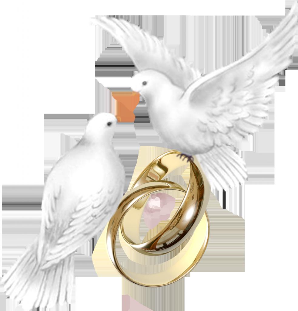 Свадебные голуби рисунок, днем