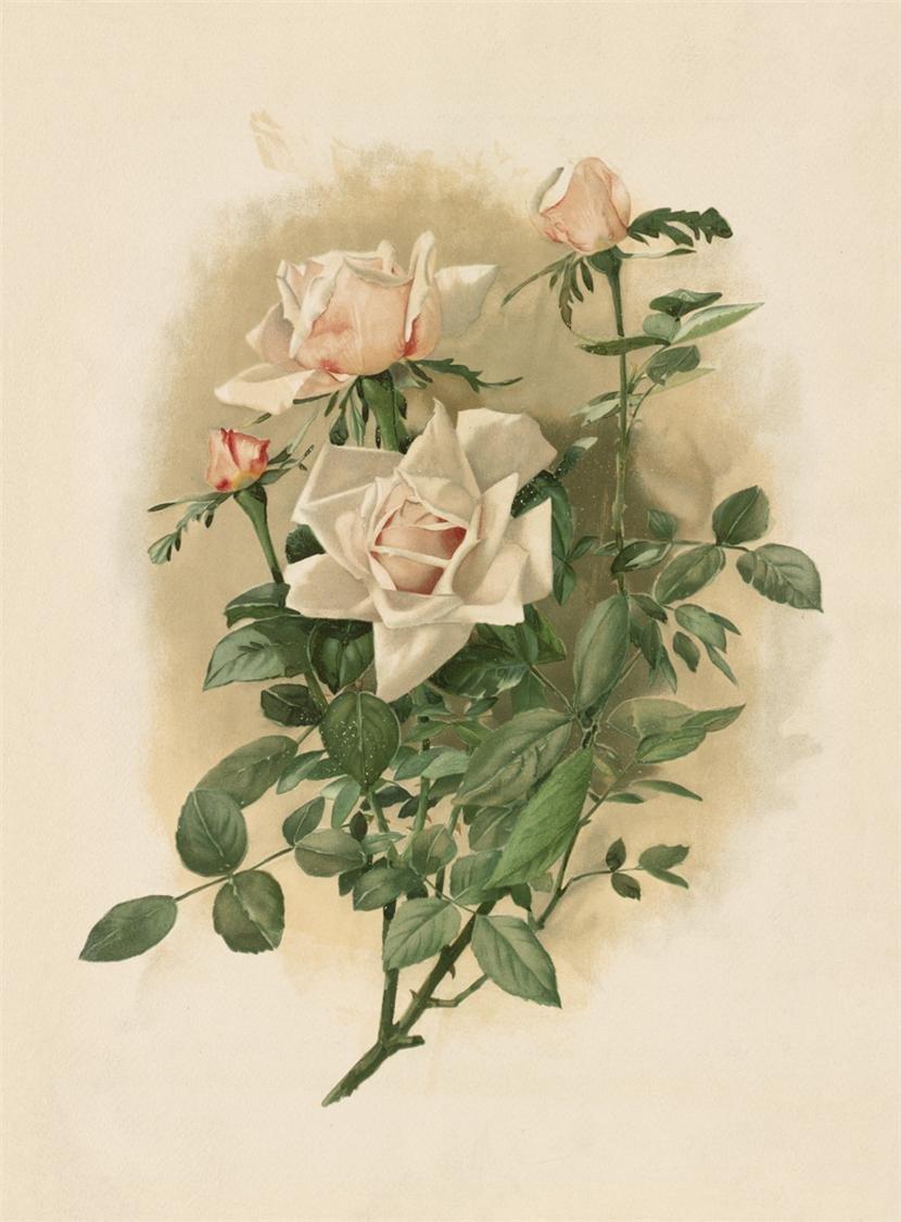 Про, картины и открытки розы