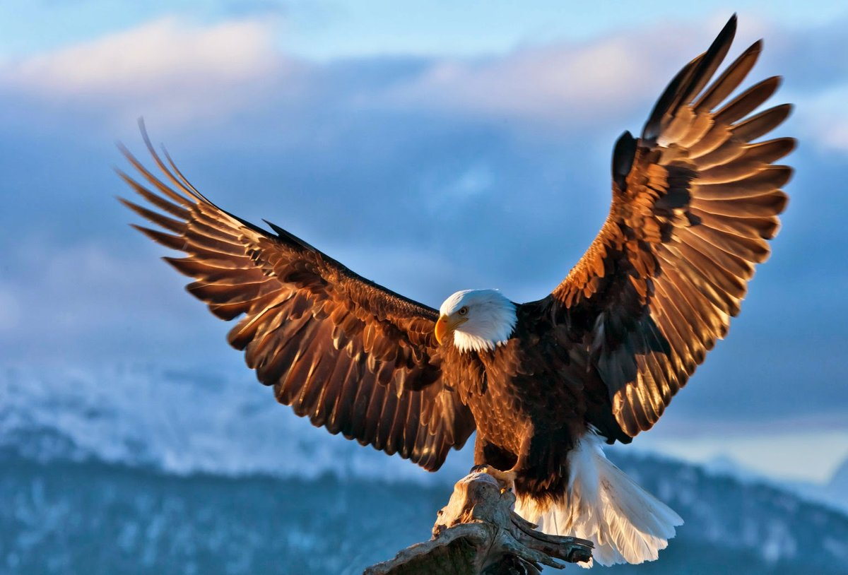 Картинки с орлами