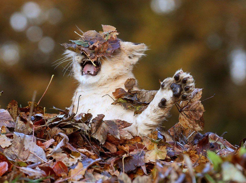 Картинки прикольные октябрь, картинки