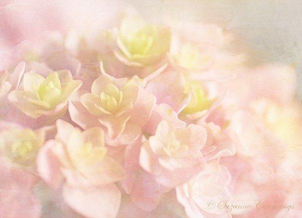 Созерцая и внимая прекрасному, мы поливаем цветы,…