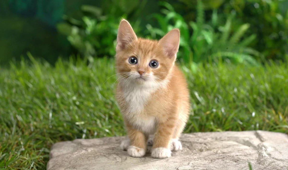 Картинки, картинки с котятами рыжими