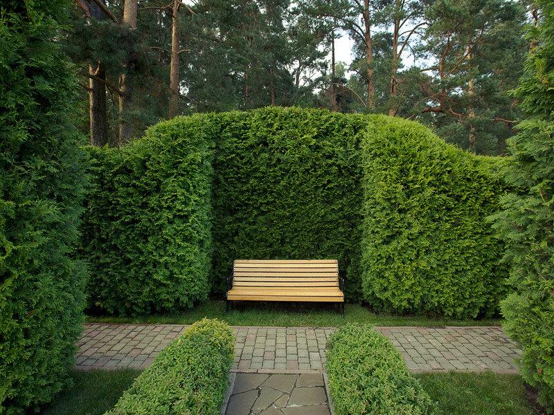 94Композиции растений в ландшафтном дизайне на