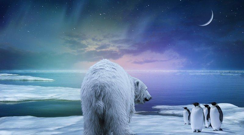 2559x1418 Обои белый медведь, пингвины, северное сияние