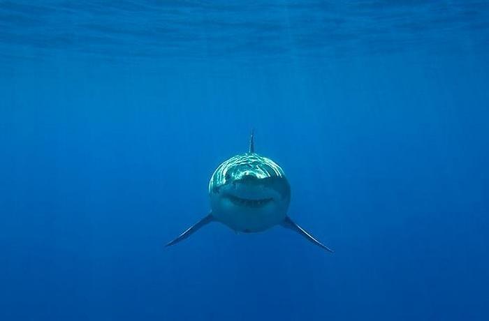 3. Не кому не советую встретиться с этой машиной убийств в открытом море, но мы за решеткой, и нашей жизни не чего не угрожает.
