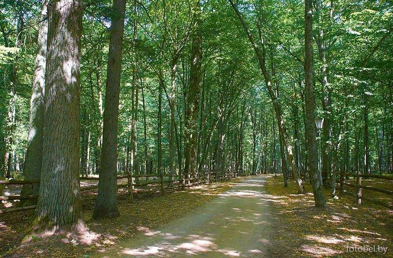 Беловежская пуща: лесные дорожки