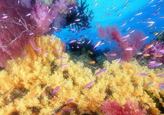 Фото и картинки подводного мира