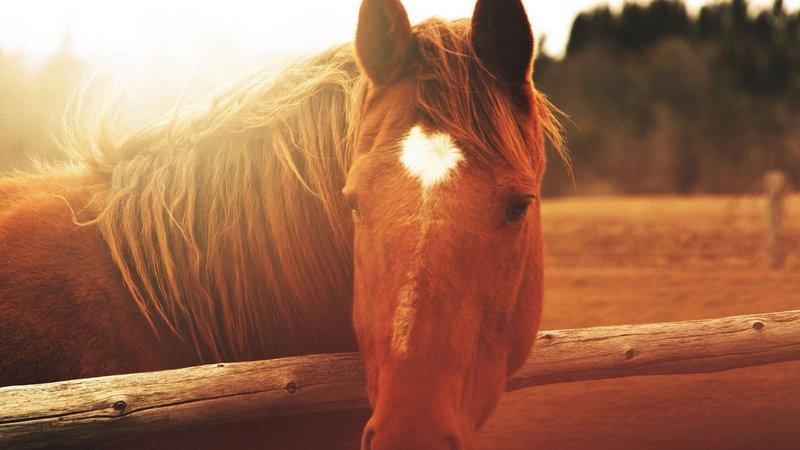 Фото лошади, красивые картинки и обои на рабочий стол