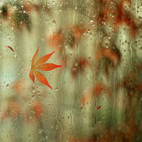 """""""Фото под дождем"""""""
