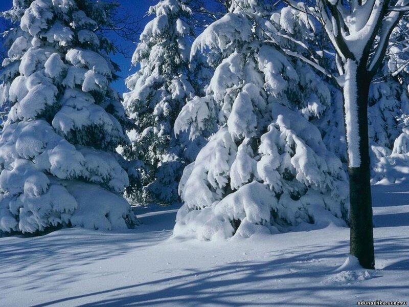 Фото,Программы,Статьи по фотографии,Новичкам - Фотосъемка зимой