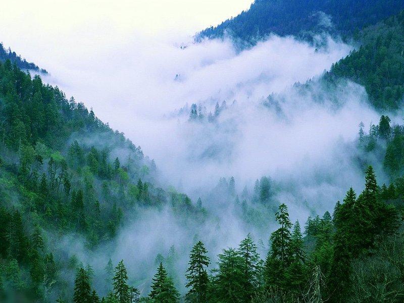 Лес на склоне окутан облаками
