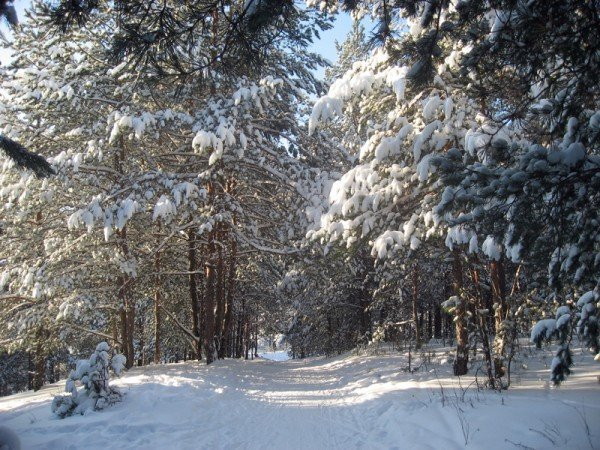 Лес зимой (12 фото)