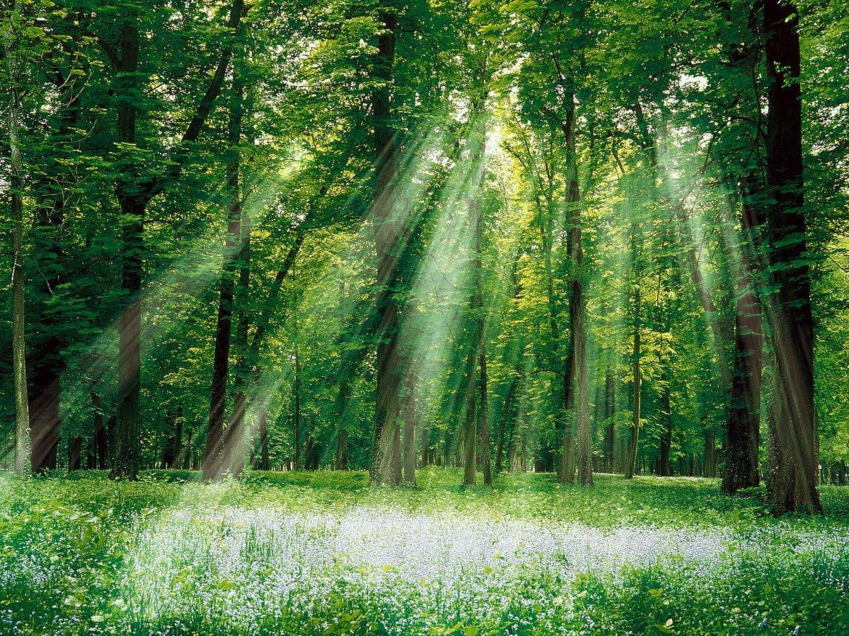 Бумаги, лесные картинки
