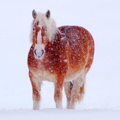 Рыжий конь Пол Муди Фото лошади