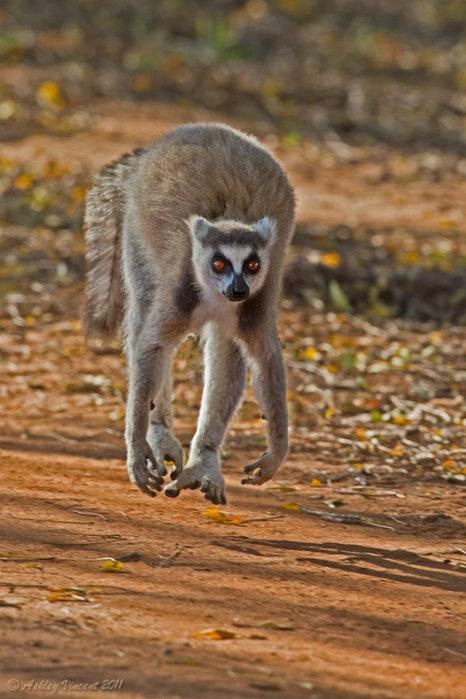 Снимаем животных во время бега