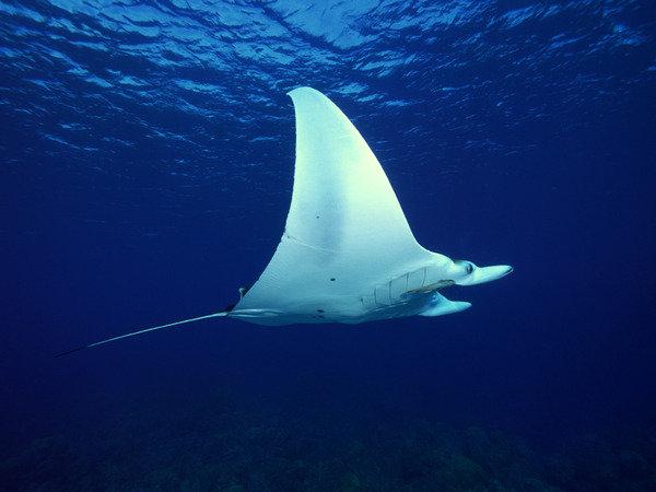 Волшебство подводного мира. | Экофауна. Блог о животных и природе.