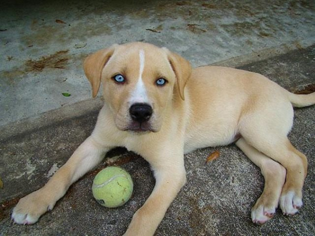 Забавные и необычные собаки, получившиеся в результате смешения разных пород