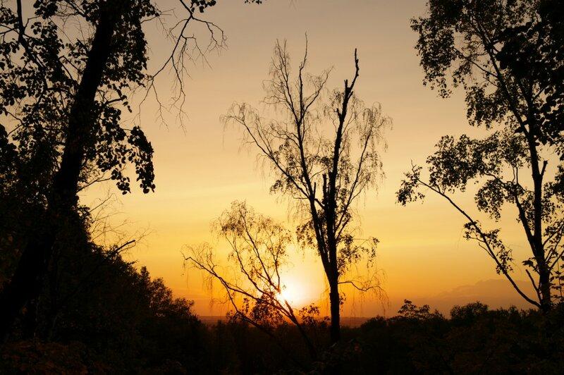 Закат на ветке дерева