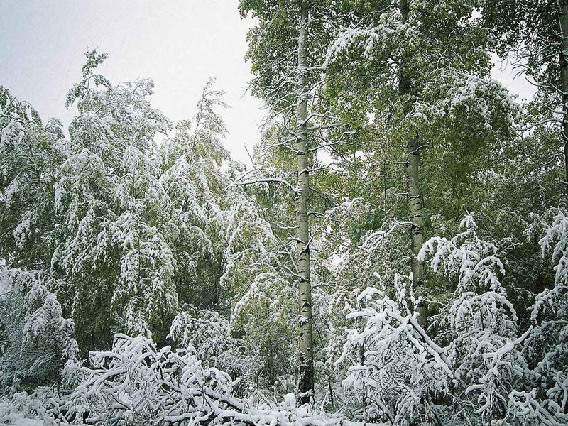 Зимние пейзажи. Зимний лес. Природа зимой. Снег.