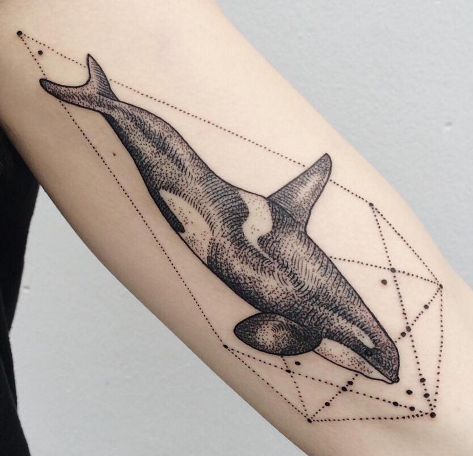 всех картинки с китами на руке сторону музея кандалакшского