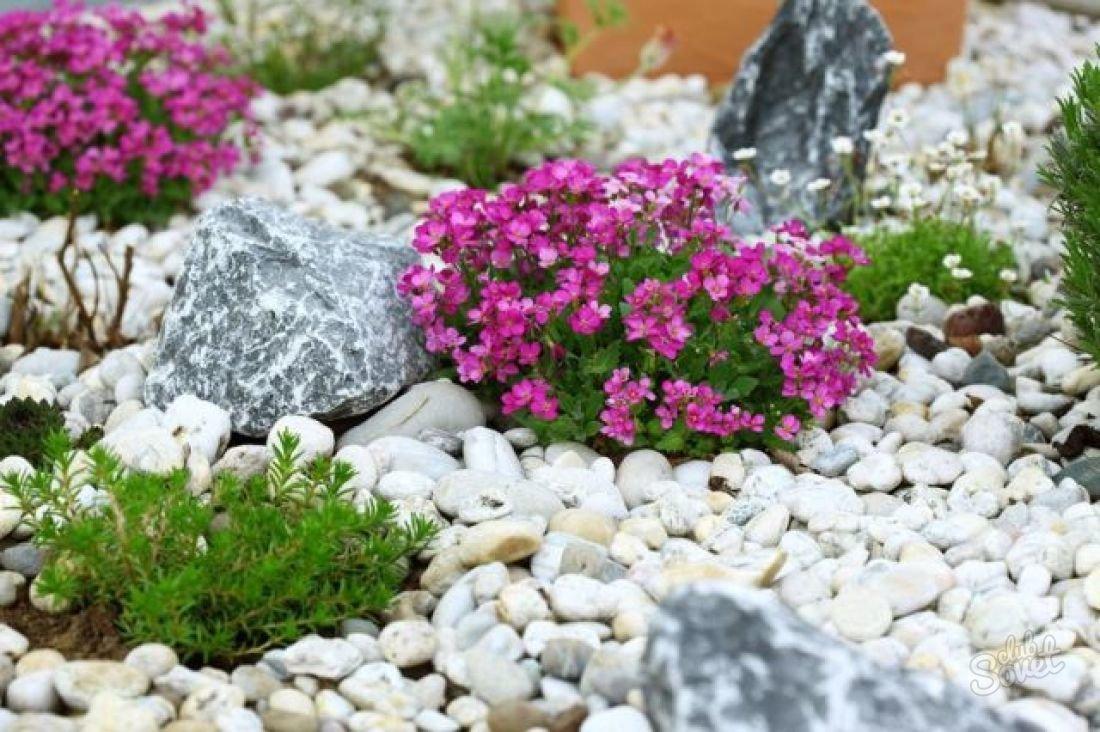 Где можно купить цветы для альпийской горки, свадебные