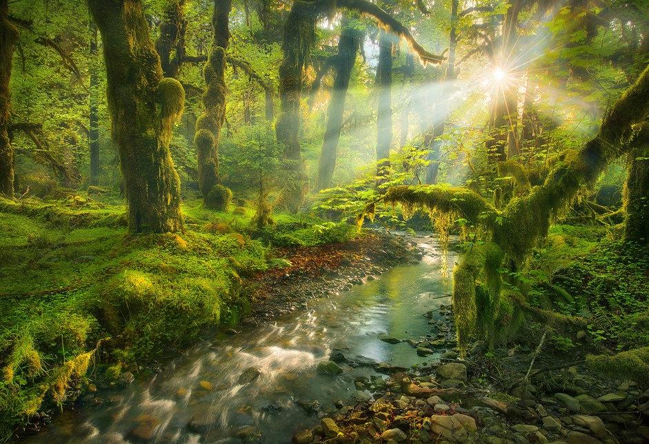 картинки с вв кодами природа