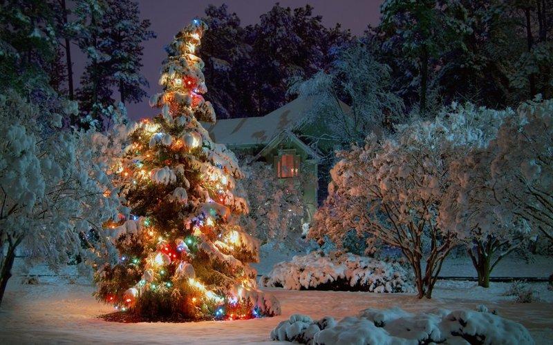 Очень красивая елка