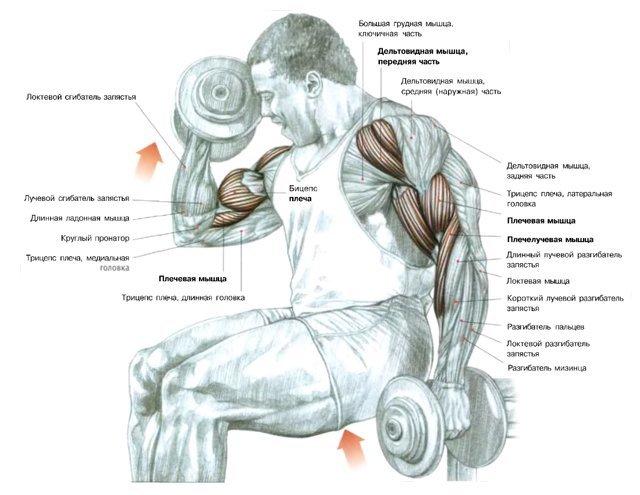 упражнения на бицепс  - Каталог файлов - бодибилдинг,упражнения,пищевые добавки