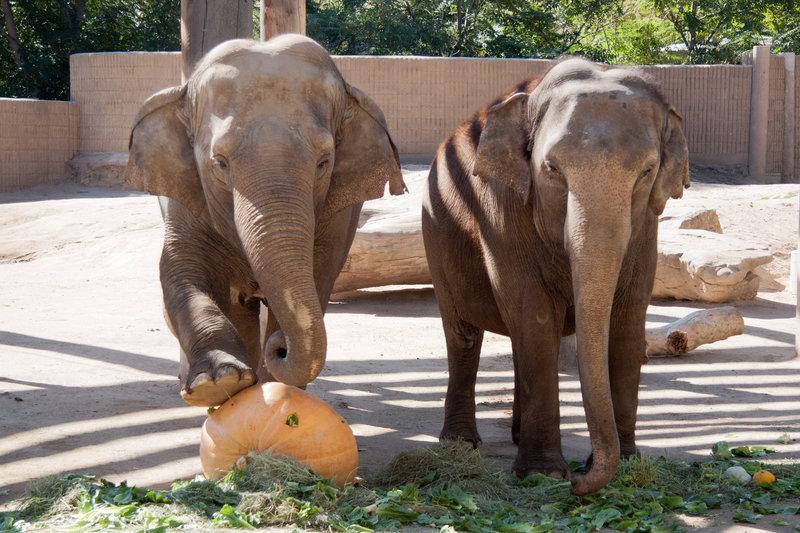 слоны Орегонского зоопарка