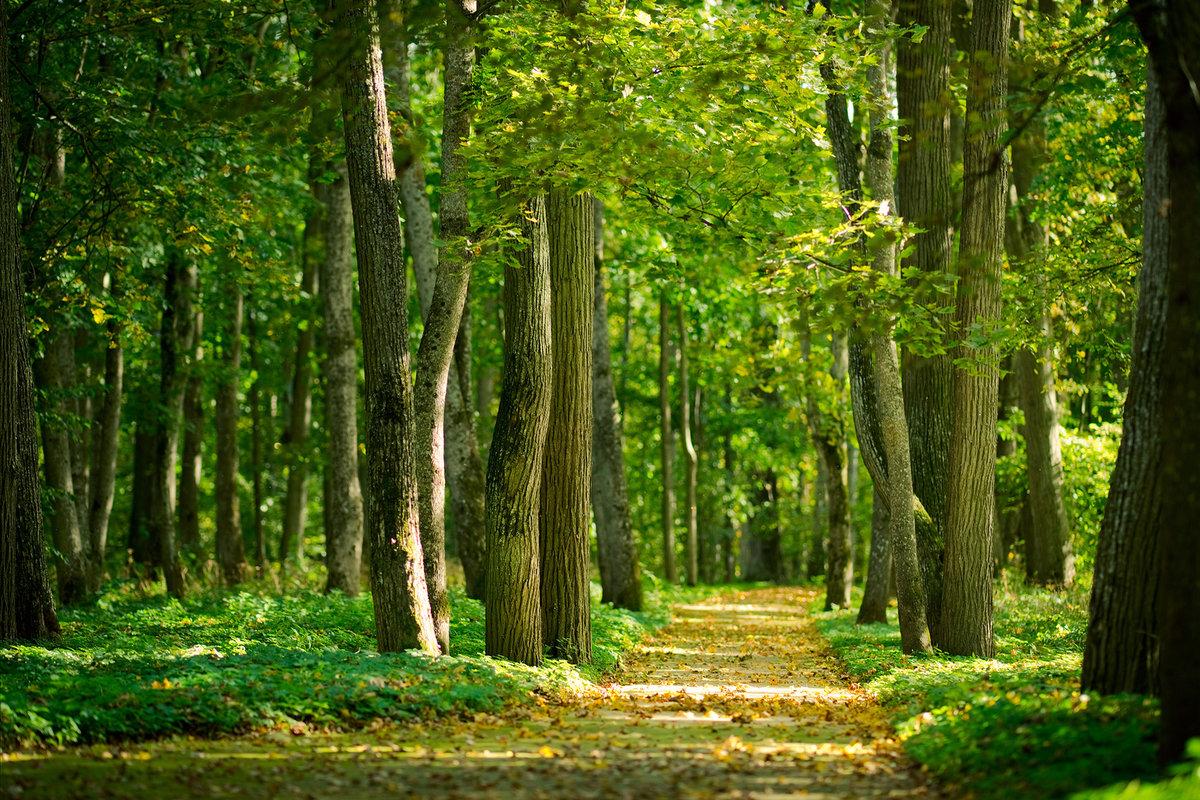 Лет, картинки о лесе
