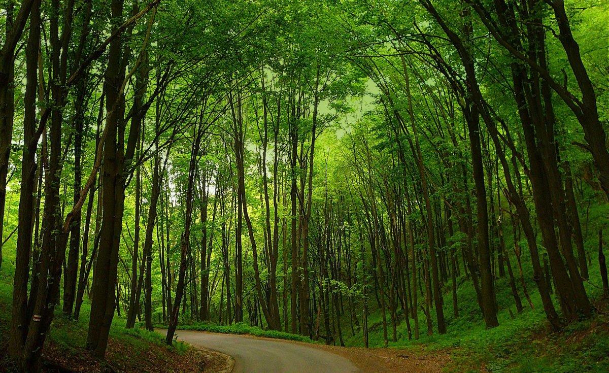 картинки разного леса образуется водянка