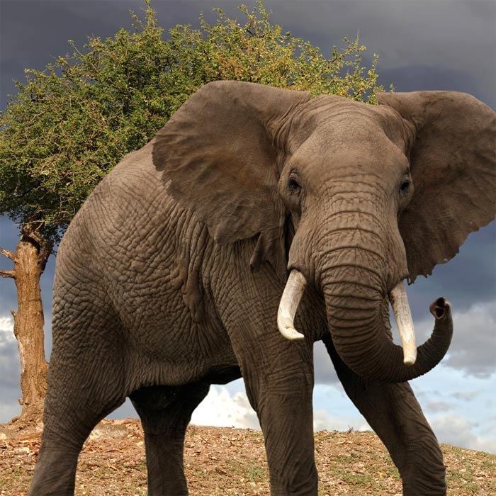 гармония картинка самого большого животного вот подсказки быстро